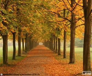 Puzle Mezi stromy na podzim