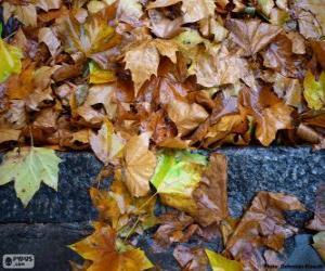 Puzle Mokré listí