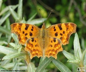 Puzle Motýlí křídla otevřené