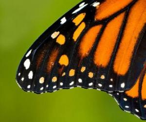 Puzle Motýlí křídlo