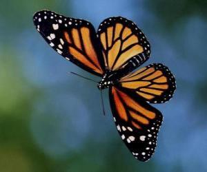 Puzle Motýl létání
