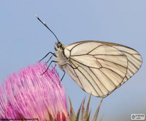 Puzle Motýl na růžový květ