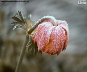 Puzle Mražené květ