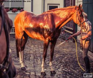 Puzle Mytí koně