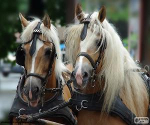 Puzle Návrh kůň
