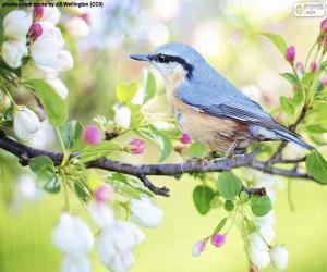 Puzle Nebe modrý pták