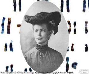 Puzle Nettie Stevens
