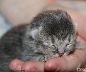 Puzle Novorozence kočka
