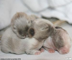 Puzle Novorozence králíků