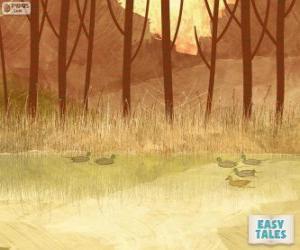 Puzle Ošklivé káčátko, koupání v rybníku se svými bratry