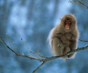 Puzle Opice sedí na větvi stromu