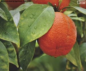 Puzle Oranžová na stromě