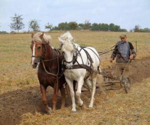 Puzle Orba s koňmi Paves