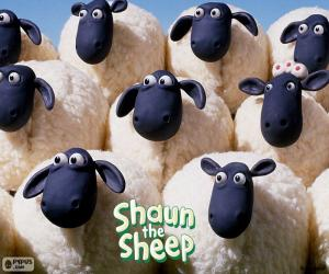 Puzle Ovce hejna Shaun