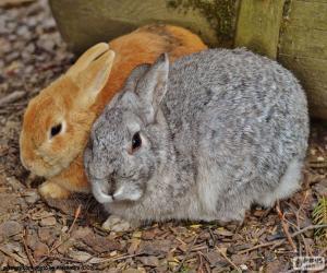 Puzle Párek králíků