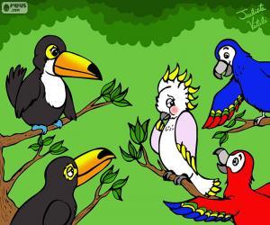 Puzle Pět ptáků Julieta Vitalij