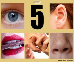 Puzle Pět smyslů