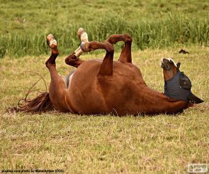 Puzle Převalování kůň