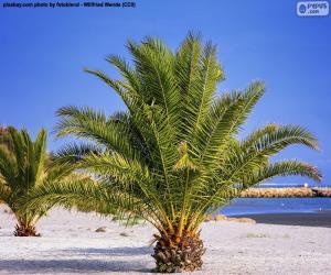 Puzle Palmy na pláži