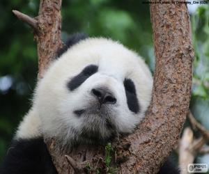 Puzle Panda ve snu