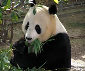 Puzle Panda Velká