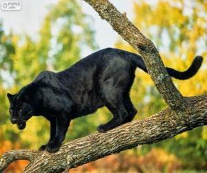 Puzle Panther černý na větvi stromu
