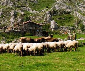 Puzle Pastýř tendenci jeho stádo