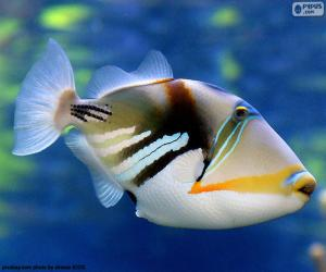 Puzle Picasso Triggerfish