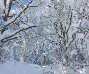 Puzle Po sněžení