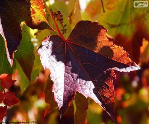 Puzle Podzim na vinici