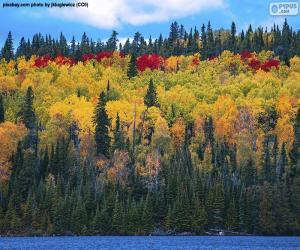 Puzle Podzimní barvy