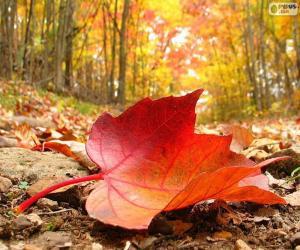 Puzle Podzimní listí lese