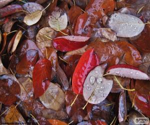 Puzle Podzimní mokré listy