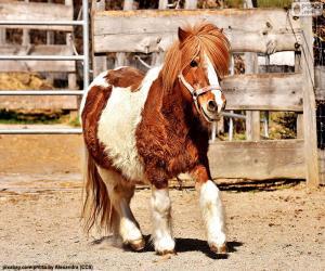 Puzle Pony