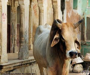 Puzle Posvátnou krávou, Indie