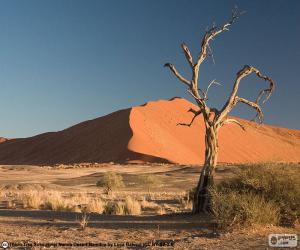 Puzle Poušť Namib, Namibie