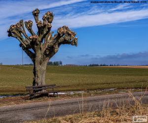 Puzle Prořezávání stromů