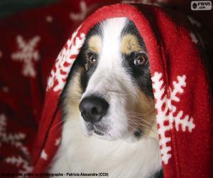 Puzle Psí Vánoce