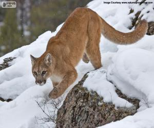 Puzle Puma americká chůzi