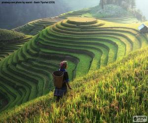 Puzle Rýžové terasy, Thajsko