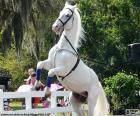 Chovaných bílý kůň