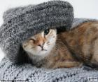 Kočka a šála