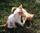 Koťata hrající