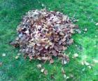 Zvedl spadané listí