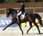Kůň a jezdec provádí drezura cvičení
