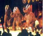 Sloni vyškoleni