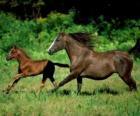 Kůň a hříbě troting do prérie