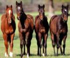 Čtyři koně