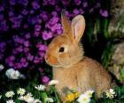 Rabbit mezi květinami