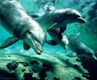 Skupina delfínů koupání v moři